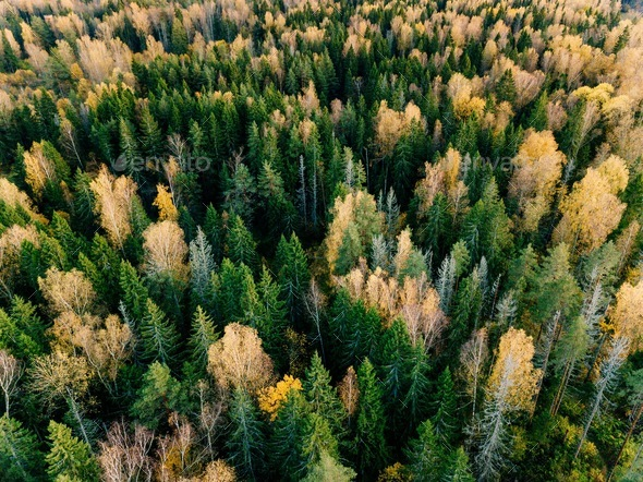 Aerial view of beautiful colorful forest during fall - Stock Photo - Images