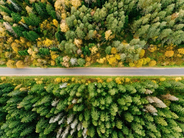 Road in the autumn forest aerial view - Stock Photo - Images