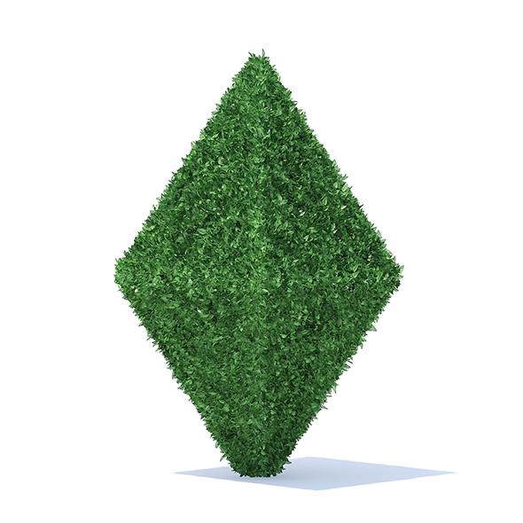 Diamond Shaped Hedge - 3DOcean Item for Sale