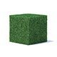 Cube Shaped Hedge