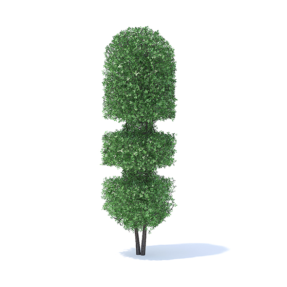 Tall Hedge - 3DOcean Item for Sale