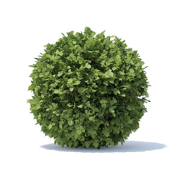 Spherical Hedge - 3DOcean Item for Sale