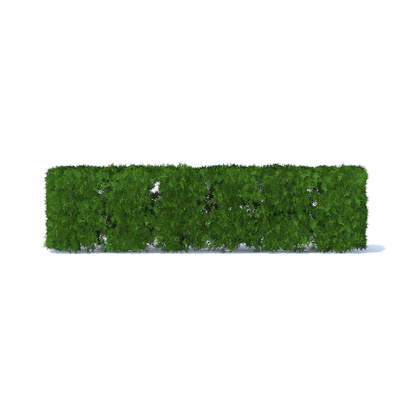 Straight Thuja Hedge - 3DOcean Item for Sale
