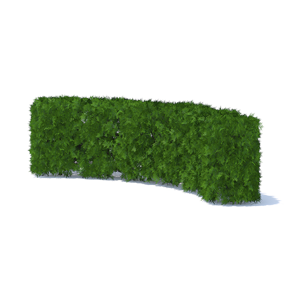 Curved Thuja Hedge - 3DOcean Item for Sale