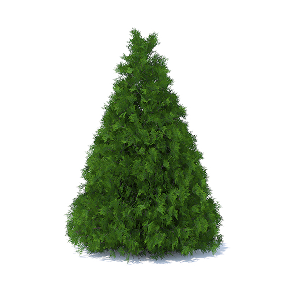 Cone Shaped Thuja Hedge - 3DOcean Item for Sale