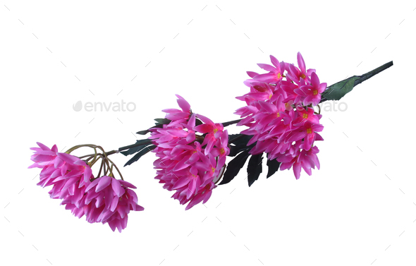 Artificial Summer Flower Isolated - Stock Photo - Images