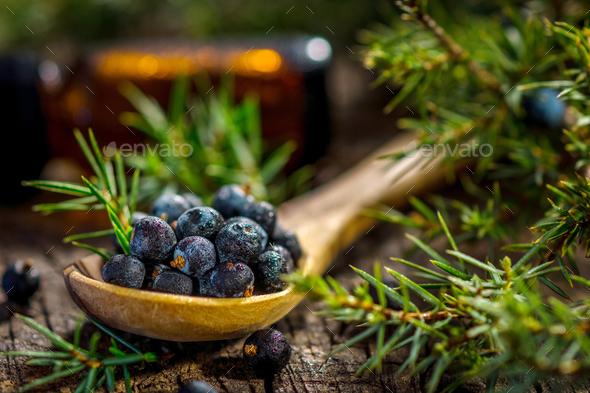 Juniper berries  - Stock Photo - Images