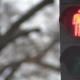 Traffic Lights for Pedestrians - VideoHive Item for Sale