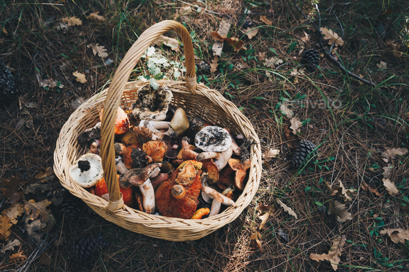 Basket with fresh mushrooms, top view - Stock Photo - Images