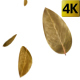 Dry Leaf Falling - VideoHive Item for Sale