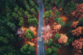 Aerial view of road in beautiful autumn forest - PhotoDune Item for Sale
