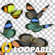 Butterflies - Colorful Swarm - Closeup Loop - VideoHive Item for Sale