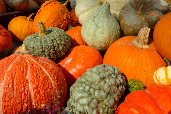 Pumpkins For Sale In Market - Stock Photo - Images