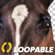 Chestnut Horse Laying Loop - VideoHive Item for Sale