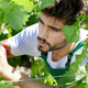 man in vineyard - PhotoDune Item for Sale