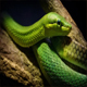 Green Tree Snake In The Jungle - VideoHive Item for Sale