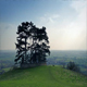 Ring Of Trees On Sunny Hilltop - VideoHive Item for Sale