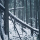 Fallen Logs In The Snow - VideoHive Item for Sale