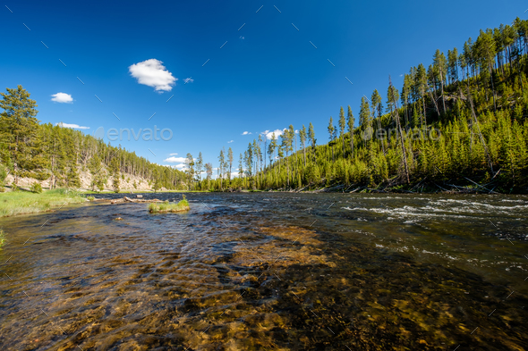 Madison River, Yellowstone National Park, Wyoming - Stock Photo - Images
