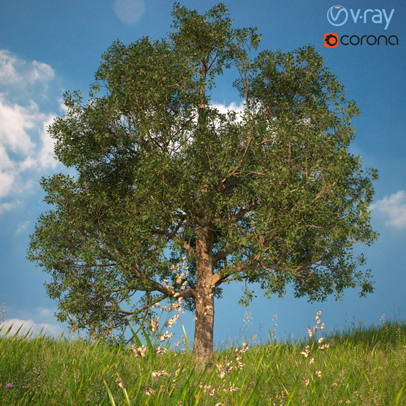 3DOcean Tree 3D Model No 1 20961785