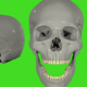 Skull - VideoHive Item for Sale