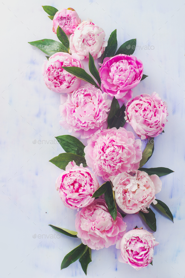 Minimal styled flat lay with peony flowers, petals and leaves on a pastel background - Stock Photo - Images