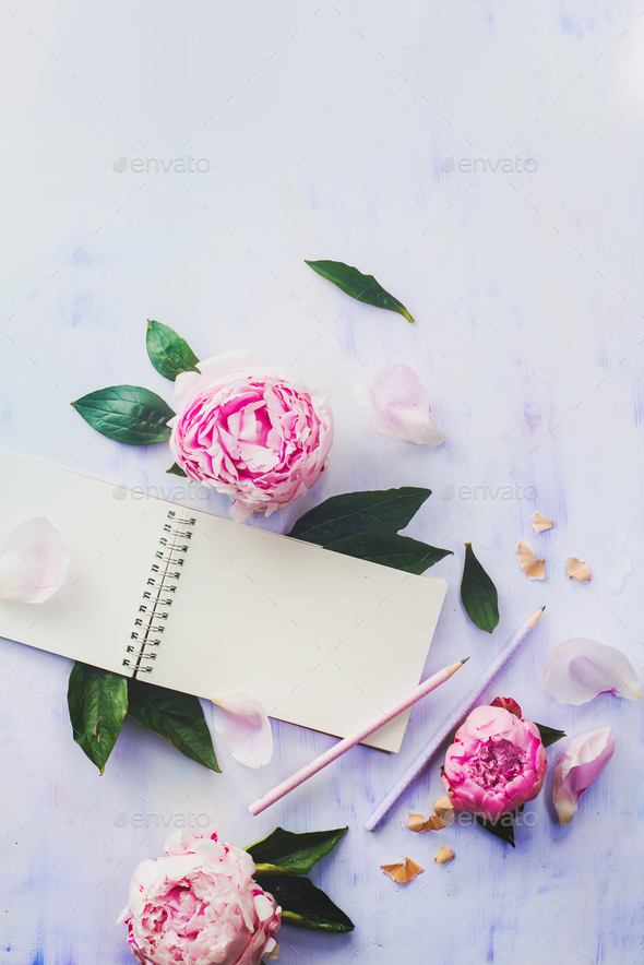 Minimal styled flat lay with peony flowers, petals and blank notebook on a white background - Stock Photo - Images
