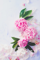 Minimal styled flatlay with peony flowers, petals and leaves on a pastel background with copy space - PhotoDune Item for Sale