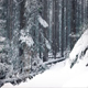 Moving Past Forest Path In Snowfall - VideoHive Item for Sale