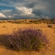 Clouds in the Desert with Flowers. , Arizona - VideoHive Item for Sale
