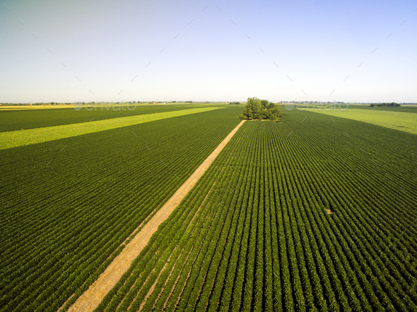 Ranch Soy Field - Stock Photo - Images