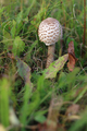 Ragged parasol in the grass - PhotoDune Item for Sale