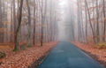 Road in the autumn beechwood - PhotoDune Item for Sale