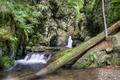 waterfalls - PhotoDune Item for Sale