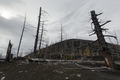Natural Disaster: Dead Wood (Dead Forest) on Kamchatka Peninsula