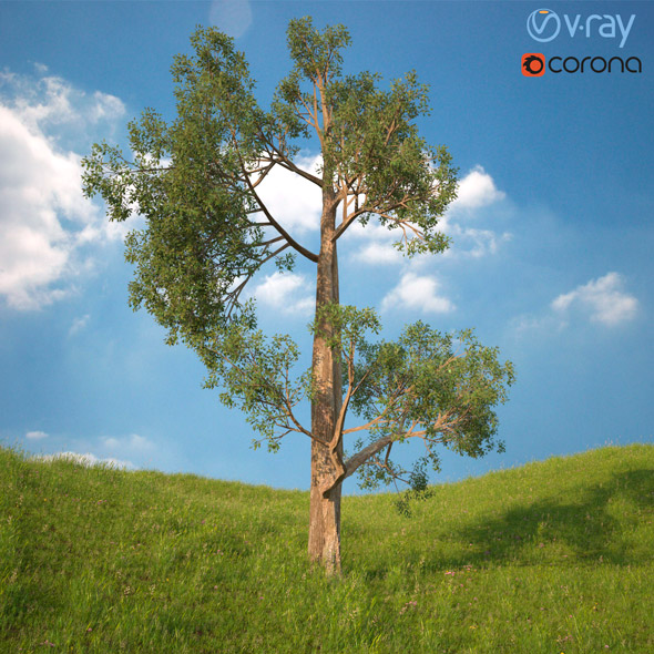 Tree 3d Model No 3 - 3DOcean Item for Sale