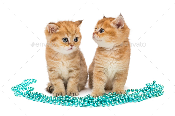 Two little ginger kitten and Christmas decorations - Stock Photo - Images