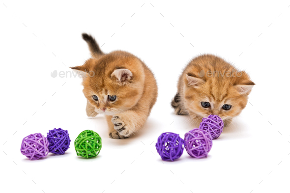 Two little kitten playing with balls  - Stock Photo - Images