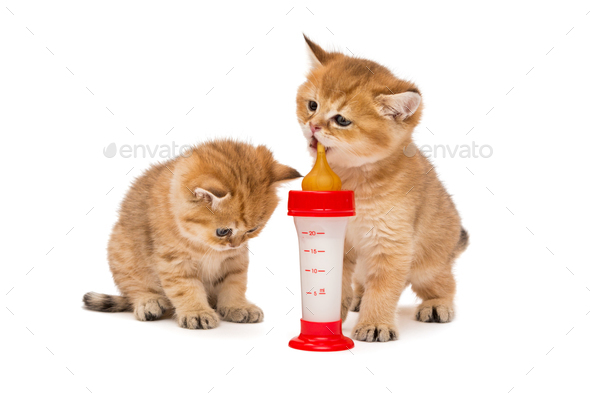 Two little red kitten and bottle of milk  - Stock Photo - Images