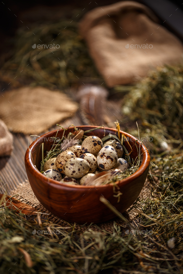 Fresh quail egg - Stock Photo - Images