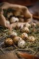 Quail eggs with hay