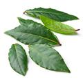 Fresh bay leaves - PhotoDune Item for Sale