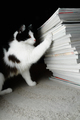 Kitten looks at a stack of magazines