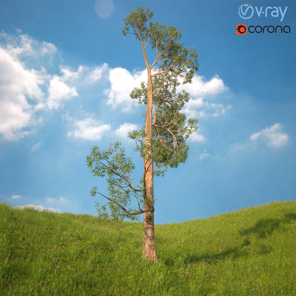 3DOcean Tree 3D Model No 4 20970024