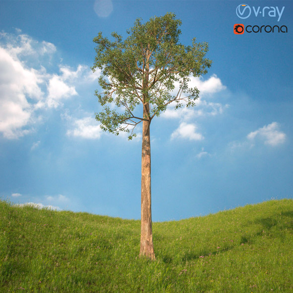 3DOcean Tree 3D Model No 5 20970251