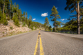 Highway in Yellowstone National Park - PhotoDune Item for Sale