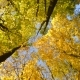 Falling Leaves in Autumn Forest - VideoHive Item for Sale