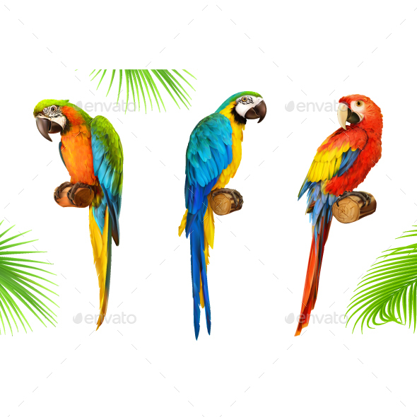 GraphicRiver Parrots 20974853