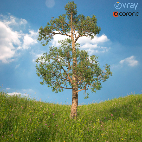 3DOcean Tree 3D Model No 2 20977444