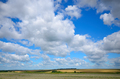 Buckwheat field under cloudy blue sky summer day - PhotoDune Item for Sale